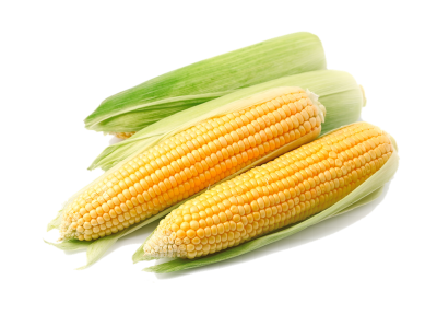 Corn Clipart HD PNG Images