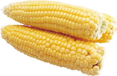 Yellow Corn Background PNG Images