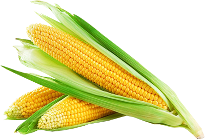 Corn Icon Clipart PNG Images