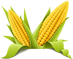 Corn Cut Out Png PNG Images