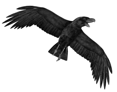 Crow Free PNG PNG Images