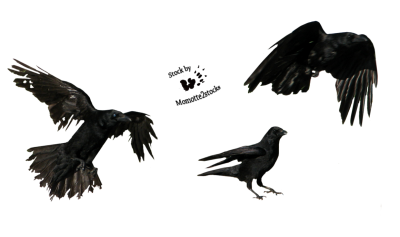 Crow Photos PNG Images