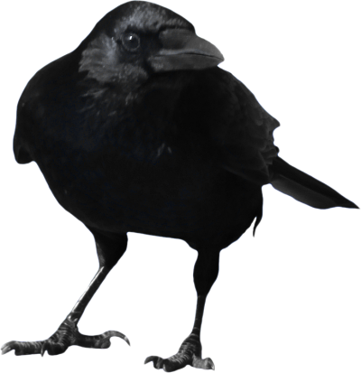 Crow PNG Picture PNG Images