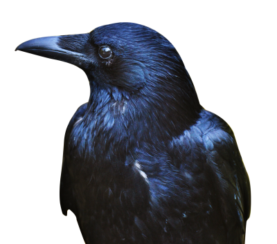 Crow Free Cut Out PNG Images