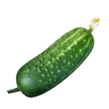 Field Cucumber Transparent Picture