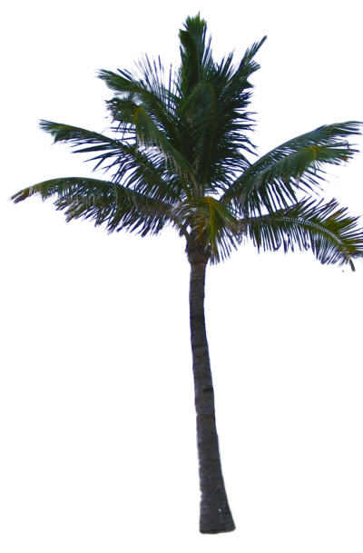 Date Palm Amazing Image Download PNG Images