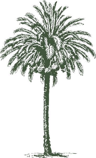 Date Palm High Quality PNG PNG Images