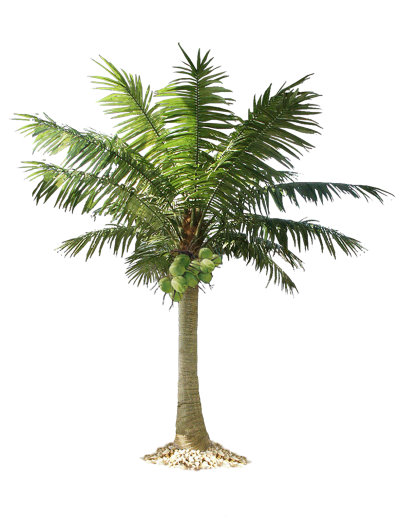 Tree Date Palm Photos PNG Images