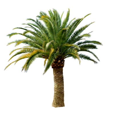 Date Palm Tree Picture PNG Images