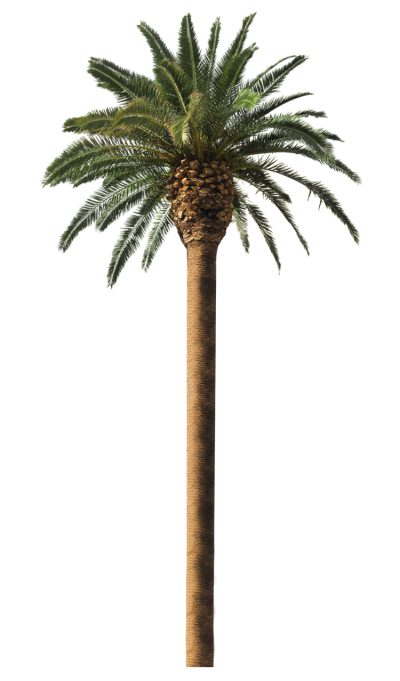 Date Palm Free PNG PNG Images