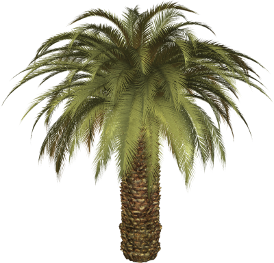 Date Palm PNG Icon PNG Images