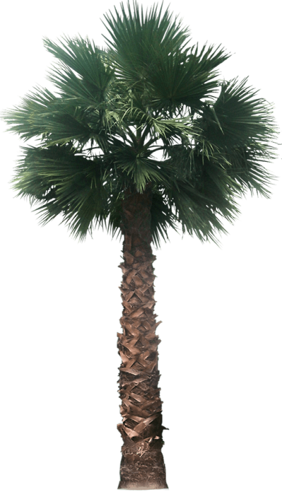 Date Palm PNG Picture PNG Images