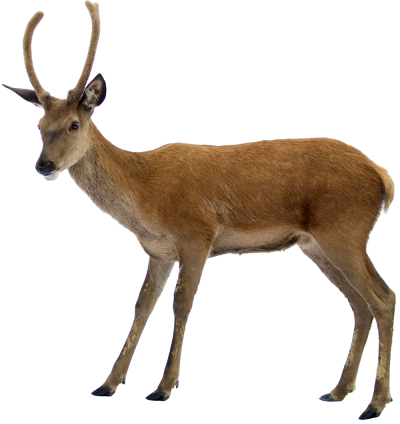 Deer Female Png PNG Images