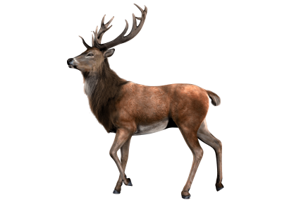 Beautiful Deer Png PNG Images