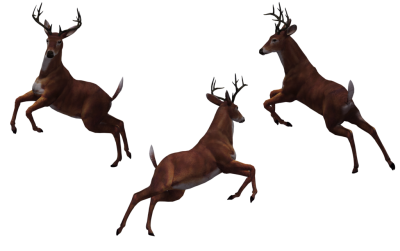 Leaping Deer Photos PNG Images