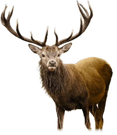 Cute Big Deer HD Image PNG Images