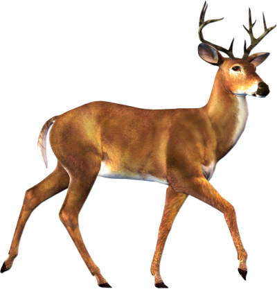 Deer Clipart PNG File PNG Images