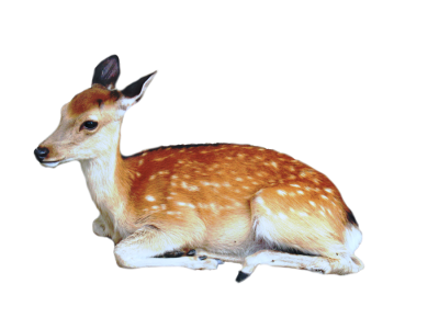 Deer Baby PNG PNG Images