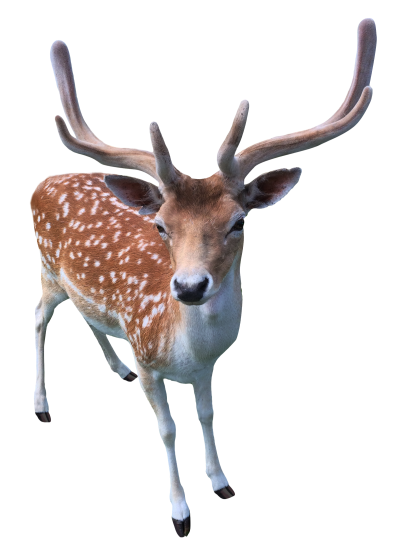 Doe Transparent Picture PNG Images