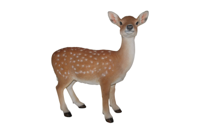 Baby Deer HD Photo Png PNG Images