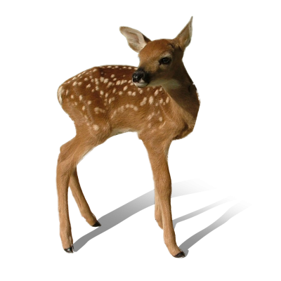 Animals, Baby Deer Transparent Image PNG Images