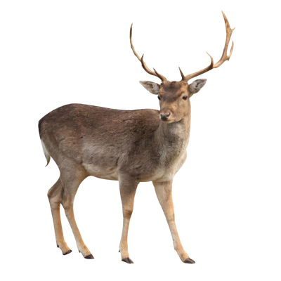 Horned Deer Photo PNG Images