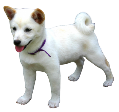 Clipart Dog Photo PNG Images