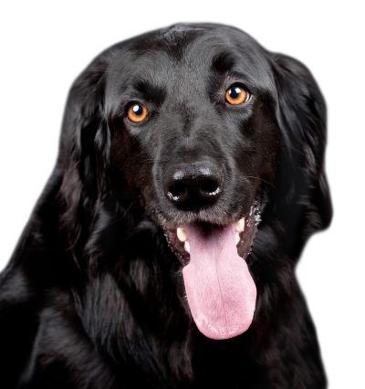 Clipart Photos Black Dog PNG