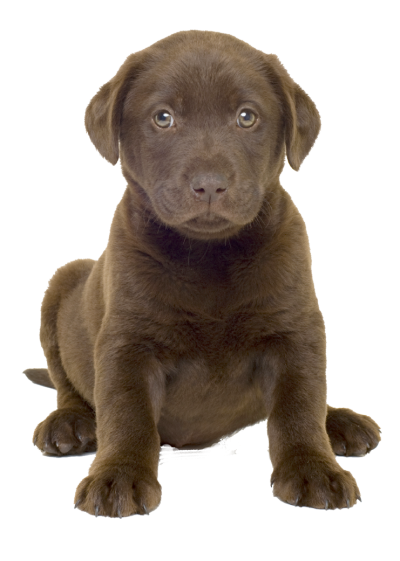 Cute Dog Best Png PNG Images