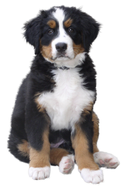 Cute Dog Clipart PNG Images