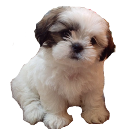 Cute Dog Picture PNG Images