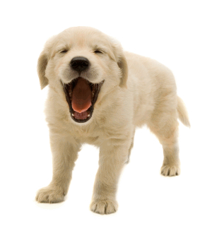 Cuties Dog Free Transparent Png PNG Images