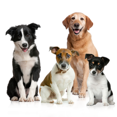 Dog Amazing Image Download 27 PNG Images