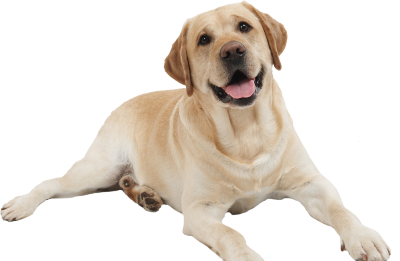 Dog Free Download PNG Images