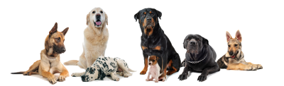 Dog Groups Png PNG Images