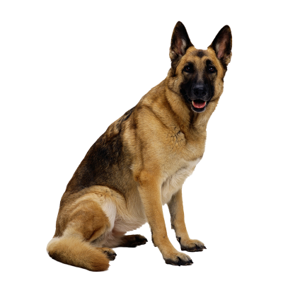 Dog Png 19 PNG Images