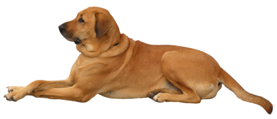 Dog Transparent Picture PNG Images