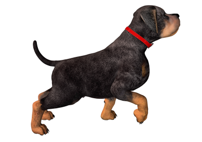 Dog Transparent Picture 25 PNG Images