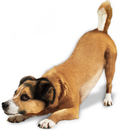 File Clipart PNG Dog PNG Images