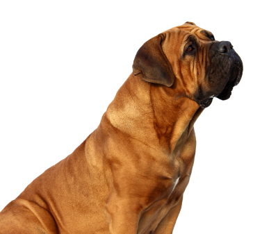 Picture Dog PNG Images