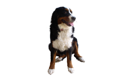 Png Dog Best PNG Images