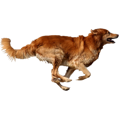 Running Dog PNG Picture