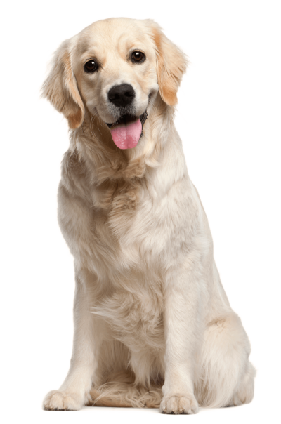 Transparent Picture Dog PNG Images