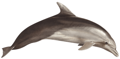 Brown Cute Dolphin Hd Transparent PNG Images