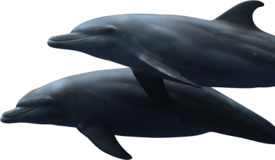Cute Binary Dolphins Hd Transparent PNG Images