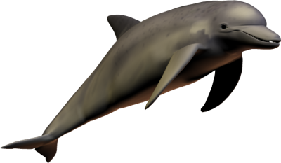 Cute Dolphin illustration Transparent Free PNG Images