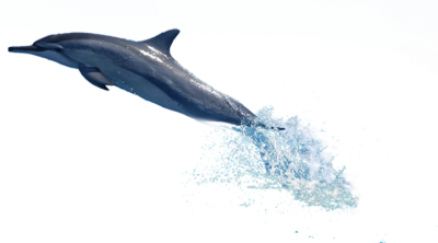 Dolphin Swimming With Water Behind Transparent Hd PNG Images