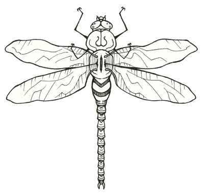 Icon PNG Dragonfly Tattoos