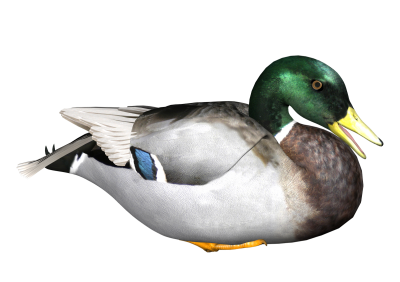 Duck Picture PNG Images