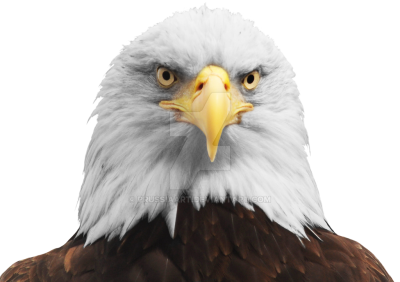 Eagle Clipart PNG Photos PNG Images